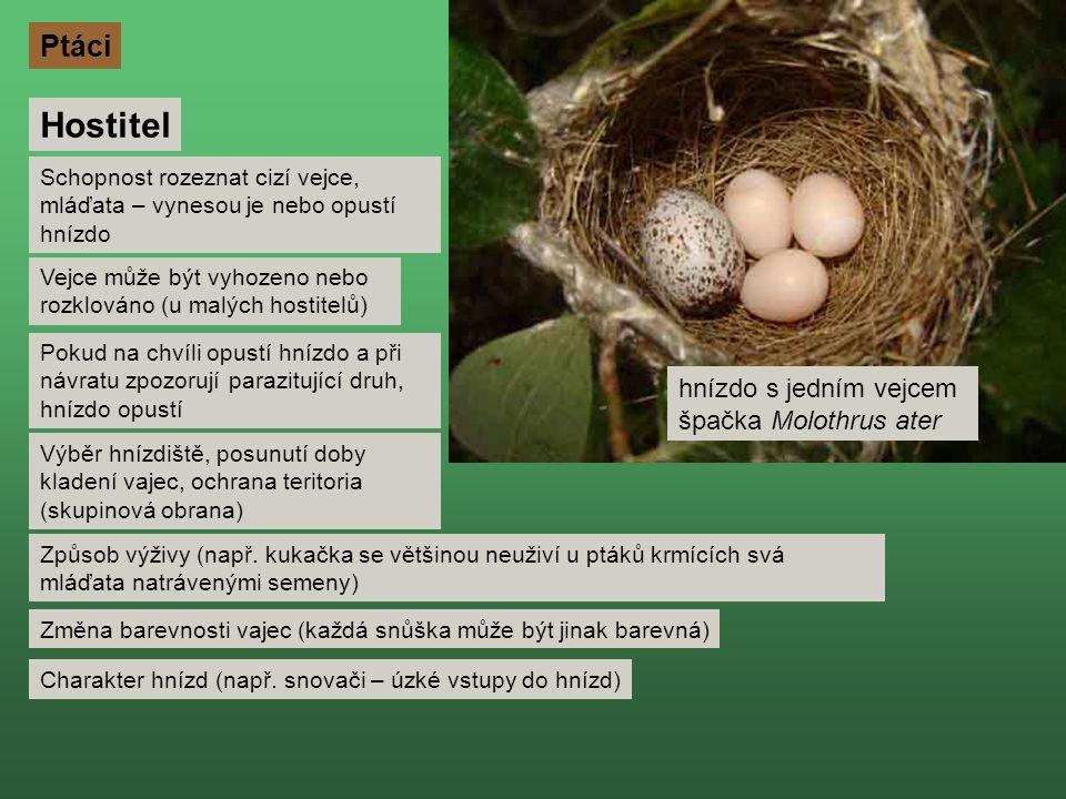 Hostitel Schopnost rozeznat cizí vejce, mláďata – vynesou je nebo opustí hnízdo Pokud na chvíli opustí hnízdo a při návratu zpozorují parazitující druh, hnízdo opustí Výběr hnízdiště, posunutí doby kladení vajec, ochrana teritoria (skupinová obrana) Způsob výživy (např.