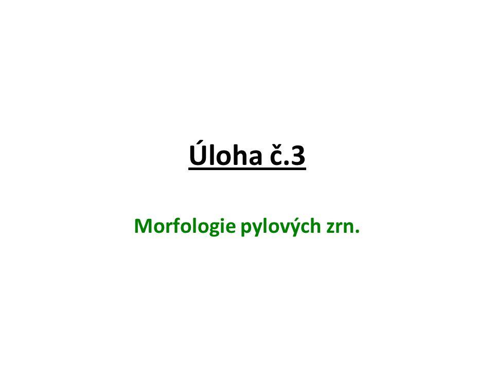Úloha č.3 Morfologie pylových zrn.