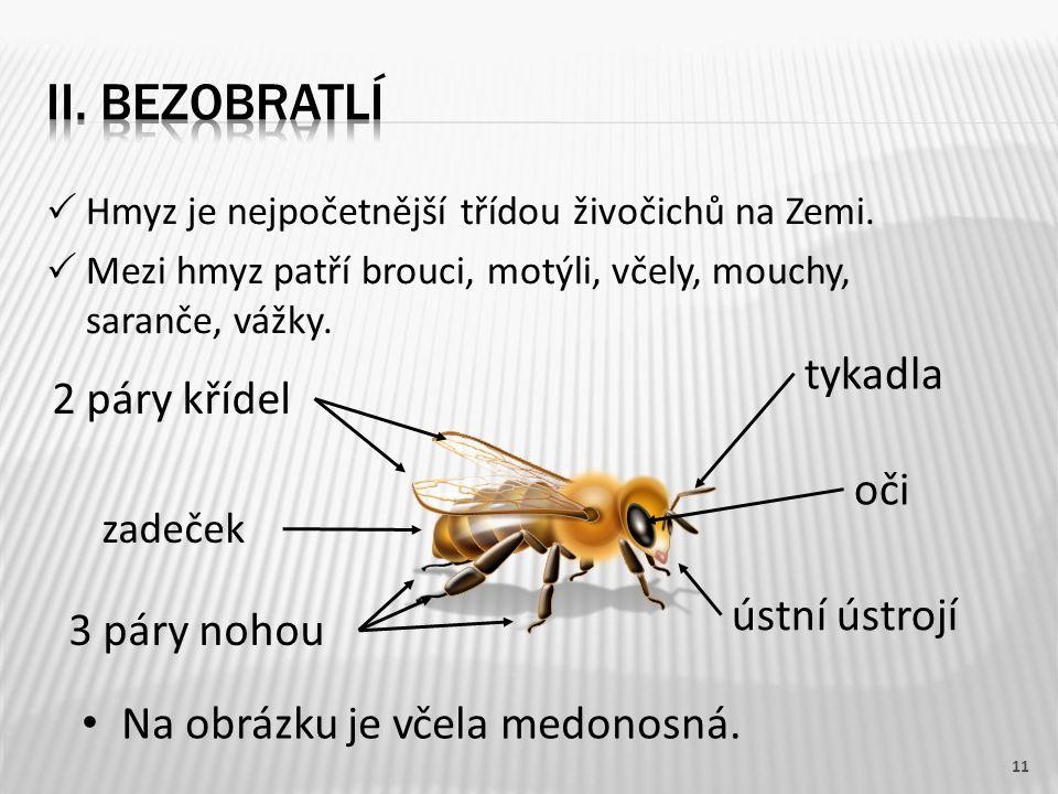 Hmyz je nejpočetnější třídou živočichů na Zemi.  Mezi hmyz patří brouci, motýli, včely, mouchy, saranče, vážky. 11 zadeček 3 páry nohou 2 páry kříd