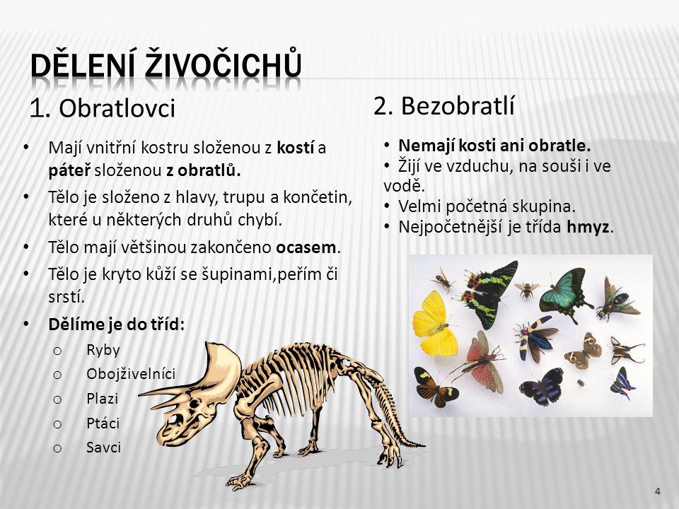 5 Na obrázku je gepard skvrnitý. ocas srst ušní boltecoko končetiny čenich