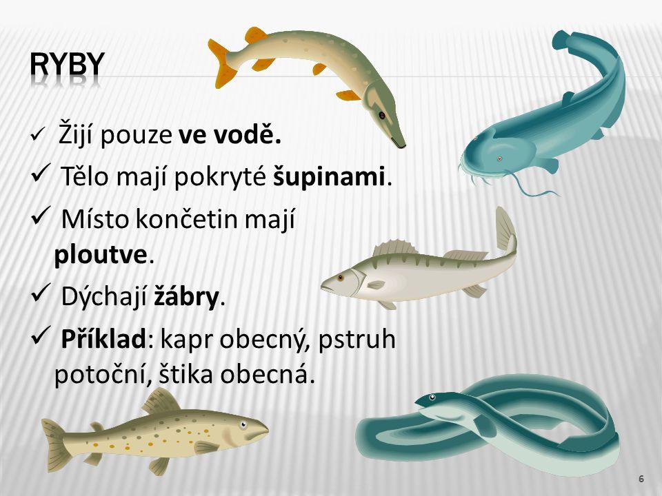 Žijí pouze ve vodě. Tělo mají pokryté šupinami. Místo končetin mají ploutve. Dýchají žábry. Příklad: kapr obecný, pstruh potoční, štika obecná. 6