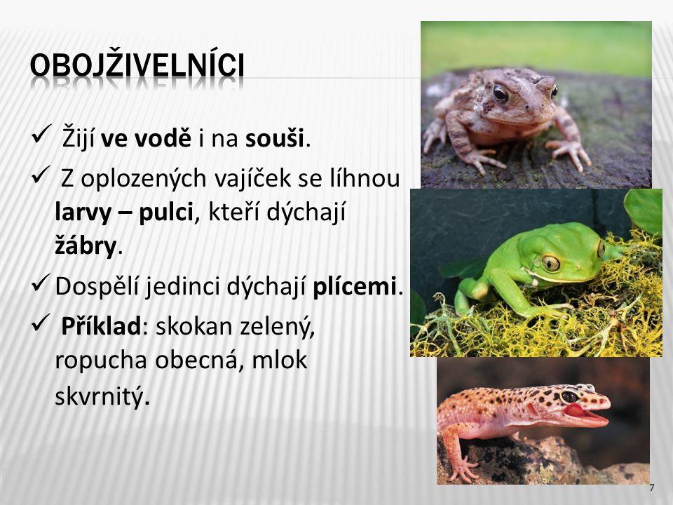 Žijí ve vodě i na souši. Z oplozených vajíček se líhnou larvy – pulci, kteří dýchají žábry. Dospělí jedinci dýchají plícemi. Příklad: skokan zelený, r