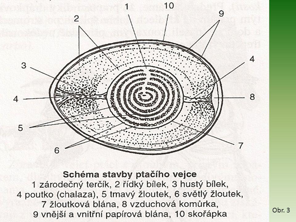 Postup – ptačí pero 1.Pozorujte okem tvar obrysového a prachového pera.