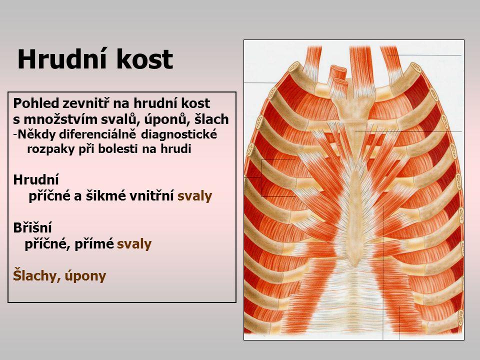 Lebka Obličejová část : - skelet horní čelisti: horní čelist=maxila lícní kost=os zygomaticum slzná kost=os lacrimale nosní kost=os nasale patrová kost=os palatinum - dolní čelist=mandibula Mozková část : skelet chránící -mozek -smysly (zrak, čich, sluch, orgány rovnováhy) Kosti lebky jsou spojeny nepohyblivými klouby, švy=sutury Uvnitř lebky- mozková dutina=mozkovna Vepředu ohraničení očnice=orbita