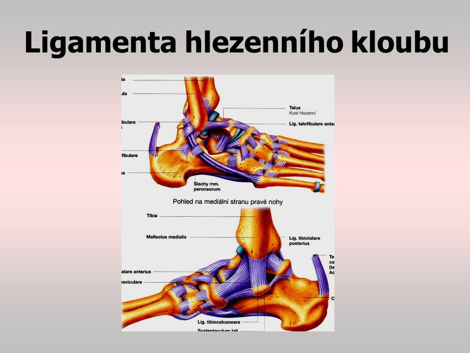 Kloub (atriculatio) Jedná se o pohyblivé spojení dvou a více kostí Typy kloubů: 1.