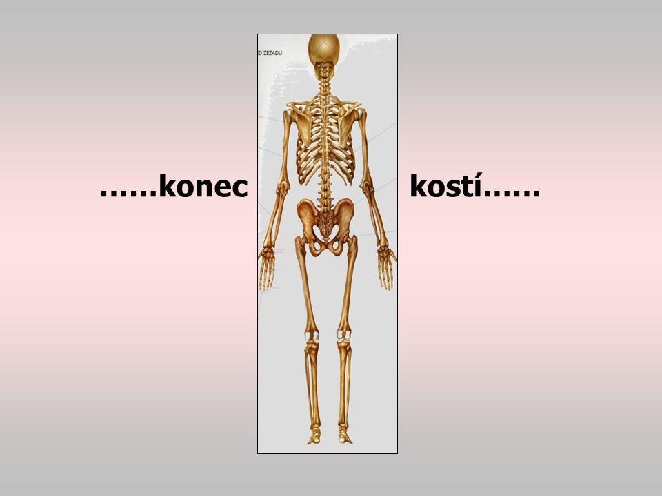 Pohybový systém kosterní svaly MUDr. Vladimír Compeľ