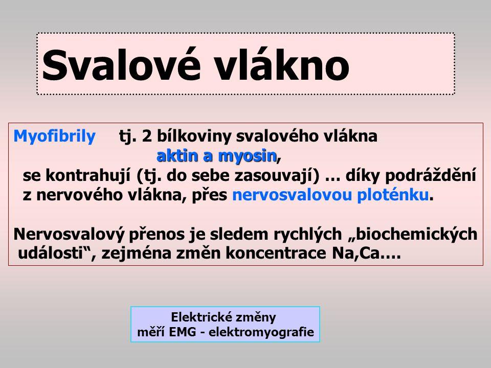 Nervosvalová ploténka acetylcholin Na Na depolarizace Nervosvalová ploténka Nervové vlákno S V A L
