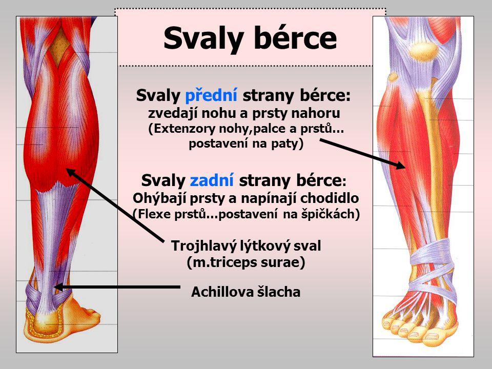 Svaly nohy Svaly palce, malíku a hluboké svaly nohy… zajišťují hlavně podélnou nožní klembu