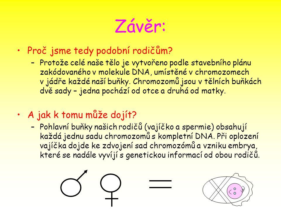 Závěr: Proč jsme tedy podobní rodičům? –Protože celé naše tělo je vytvořeno podle stavebního plánu zakódovaného v molekule DNA, umístěné v chromozomec
