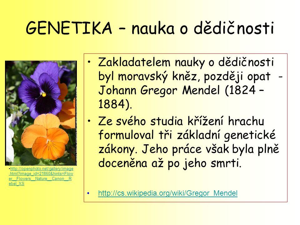 GENETIKA – nauka o dědičnosti Zakladatelem nauky o dědičnosti byl moravský kněz, později opat - Johann Gregor Mendel (1824 – 1884). Ze svého studia kř