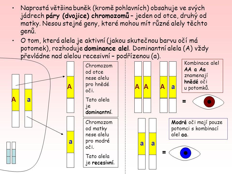 1) Jedinec, který má znak určený stejnými alelami (dominantními či recesivními), se nazývá HOMOZYGOT.