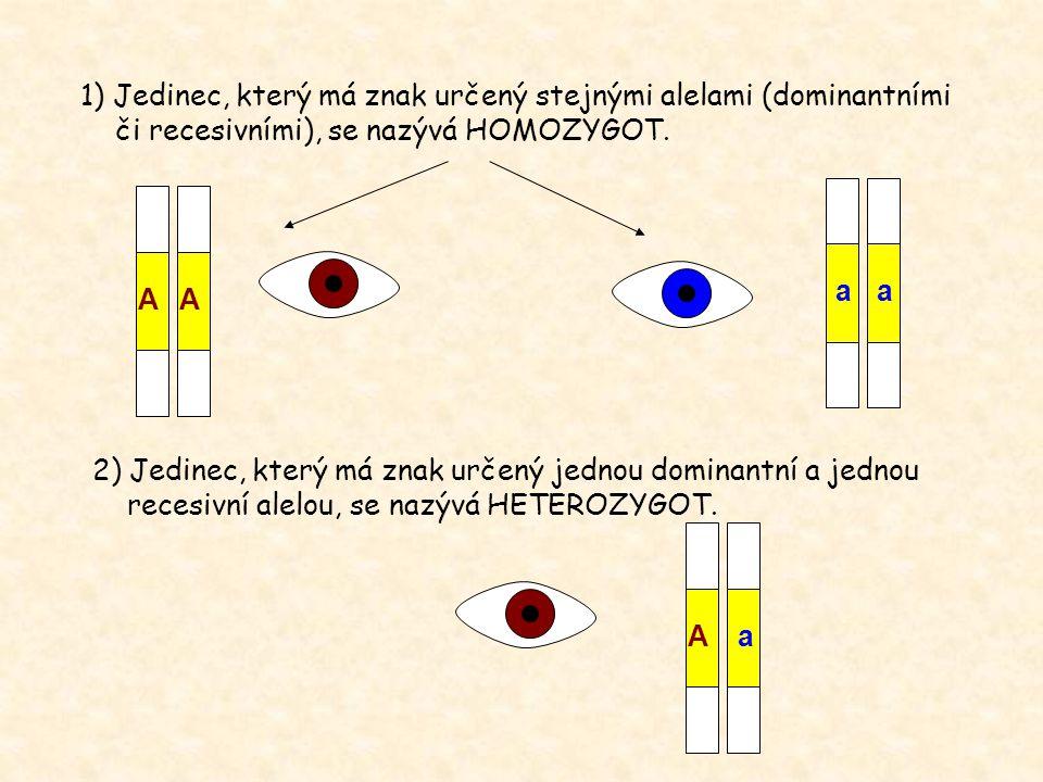 1) Jedinec, který má znak určený stejnými alelami (dominantními či recesivními), se nazývá HOMOZYGOT. 2) Jedinec, který má znak určený jednou dominant