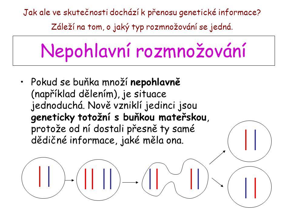 Nepohlavní rozmnožování Pokud se buňka množí nepohlavně (například dělením), je situace jednoduchá. Nově vzniklí jedinci jsou geneticky totožní s buňk