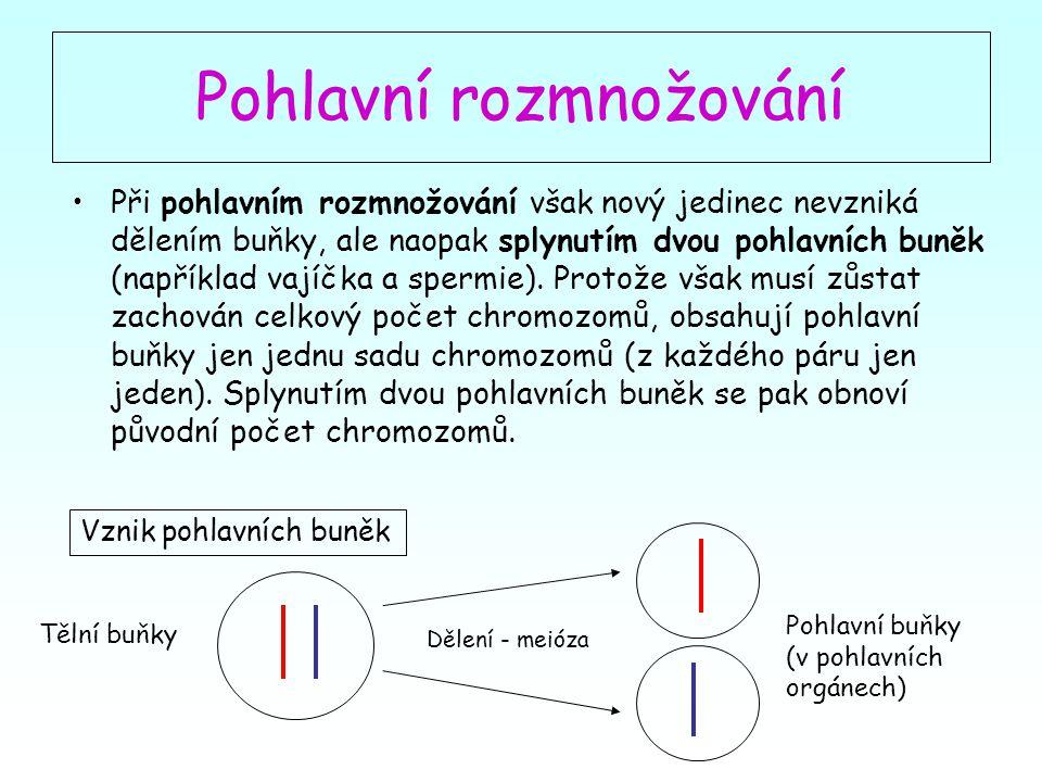 Pohlavní buňky samčí - spermie Nový jedinec (oplozené vajíčko) Schéma pohlavního rozmnožování meióza Pohlavní buňky samičí - vajíčka Tělní buňky samičí Tělní buňky samčí oplození embryo dítě Dospělý jedinec