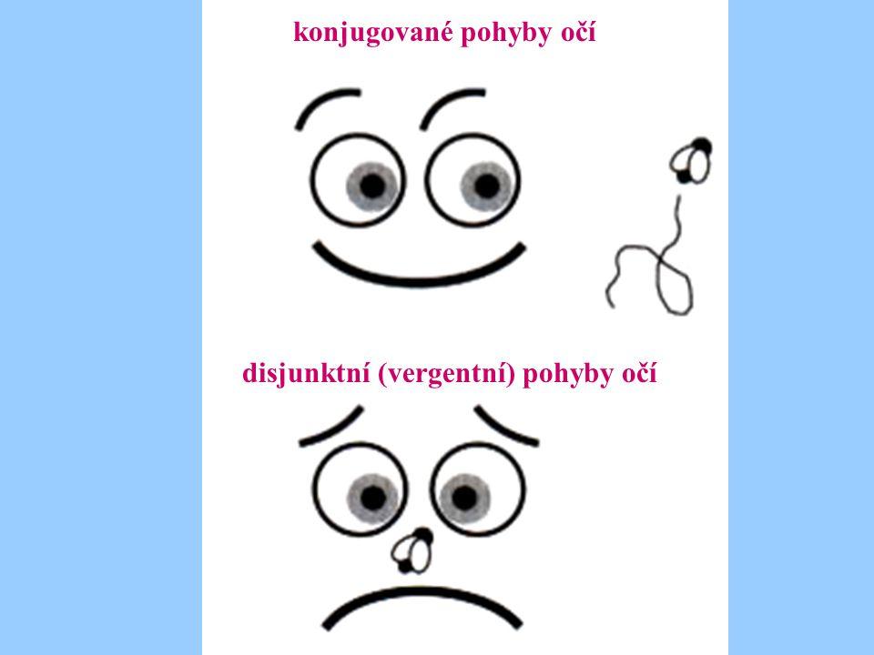 konjugované pohyby očí disjunktní (vergentní) pohyby očí