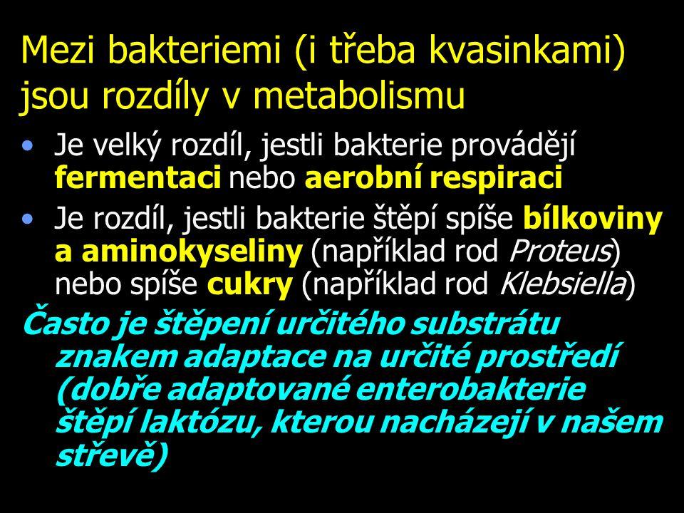 Mezi bakteriemi (i třeba kvasinkami) jsou rozdíly v metabolismu Je velký rozdíl, jestli bakterie provádějí fermentaci nebo aerobní respiraci Je rozdíl