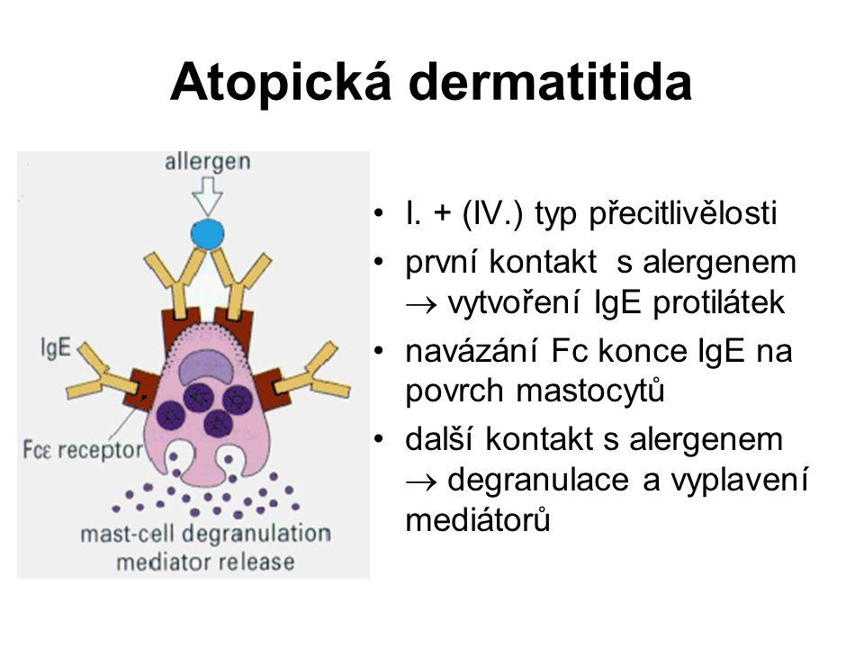 Atopická dermatitida I. + (IV.) typ přecitlivělosti první kontakt s alergenem  vytvoření IgE protilátek navázání Fc konce IgE na povrch mastocytů dal