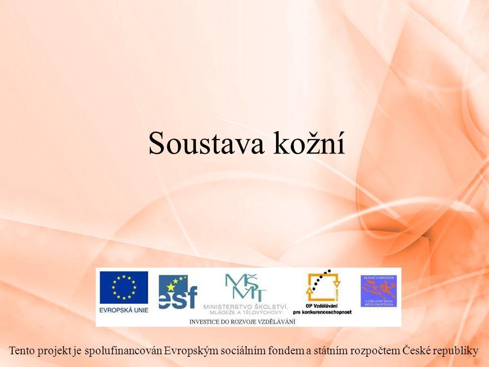 Soustava kožní Tento projekt je spolufinancován Evropským sociálním fondem a státním rozpočtem České republiky