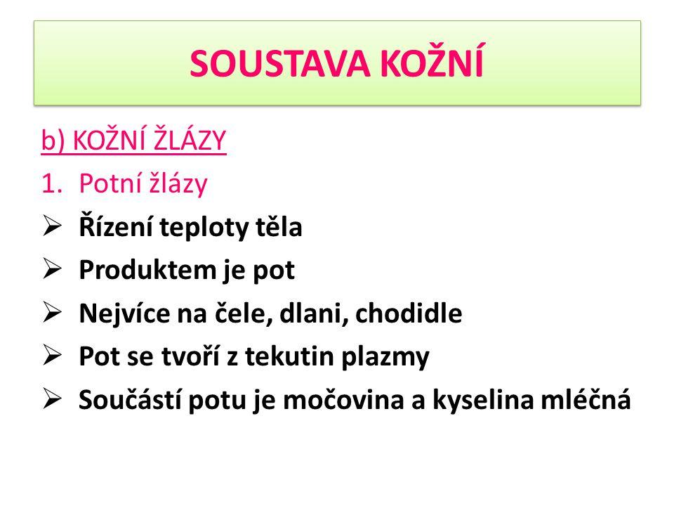 SOUSTAVA KOŽNÍ 2.