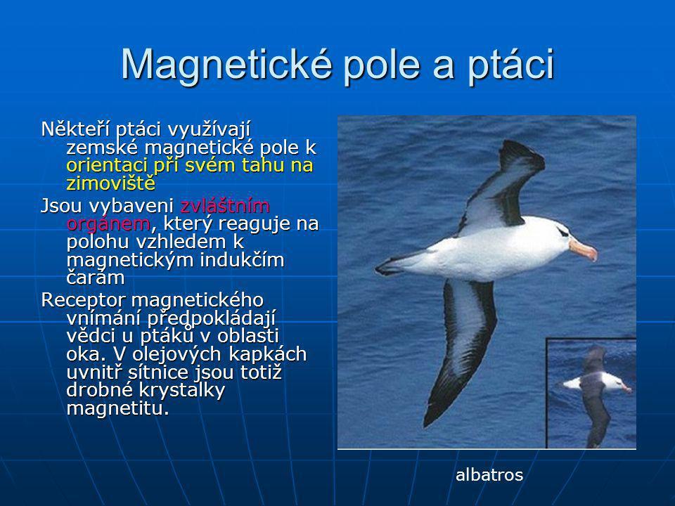 Magnetické pole a ptáci Někteří ptáci využívají zemské magnetické pole k orientaci při svém tahu na zimoviště Jsou vybaveni zvláštním orgánem, který r