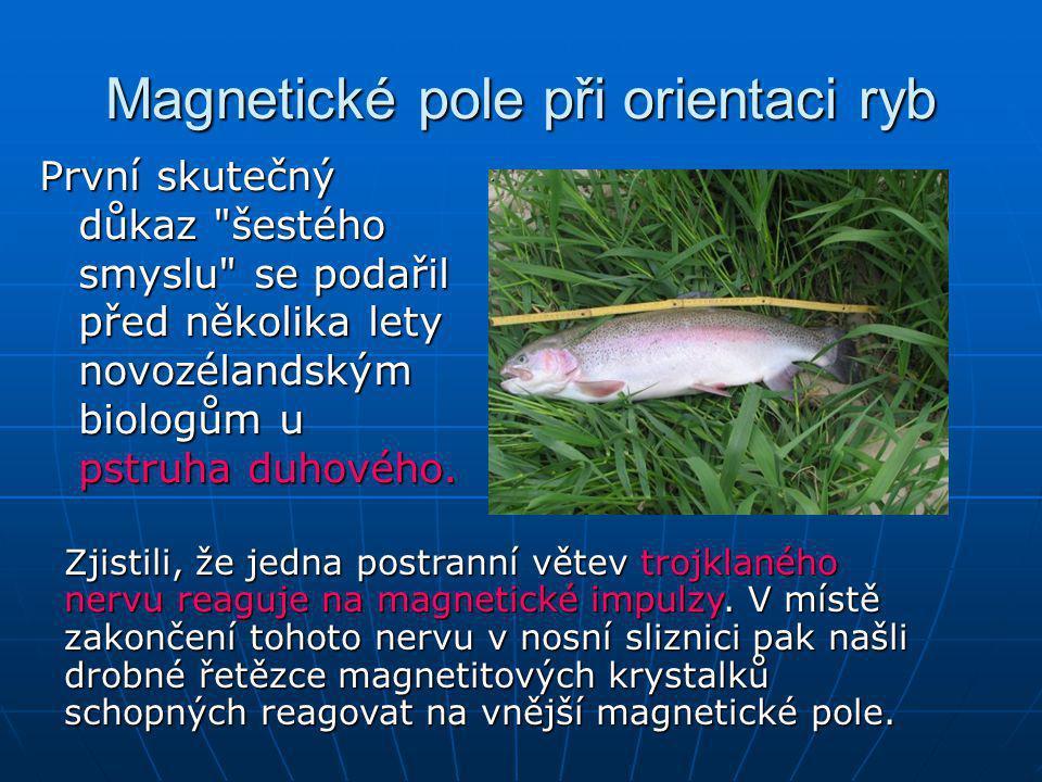 Magnetické pole při orientaci ryb První skutečný důkaz