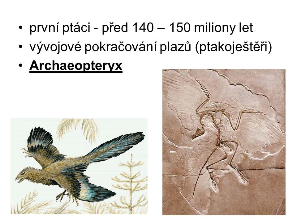 první ptáci - před 140 – 150 miliony let vývojové pokračování plazů (ptakoještěři) Archaeopteryx