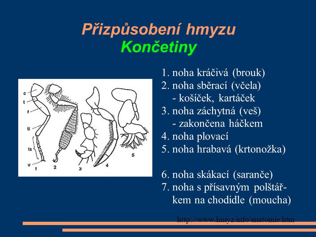 Přizpůsobení hmyzu Končetiny 1. noha kráčivá (brouk) 2. noha sběrací (včela) - košíček, kartáček 3. noha záchytná (veš) - zakončena háčkem 4. noha plo