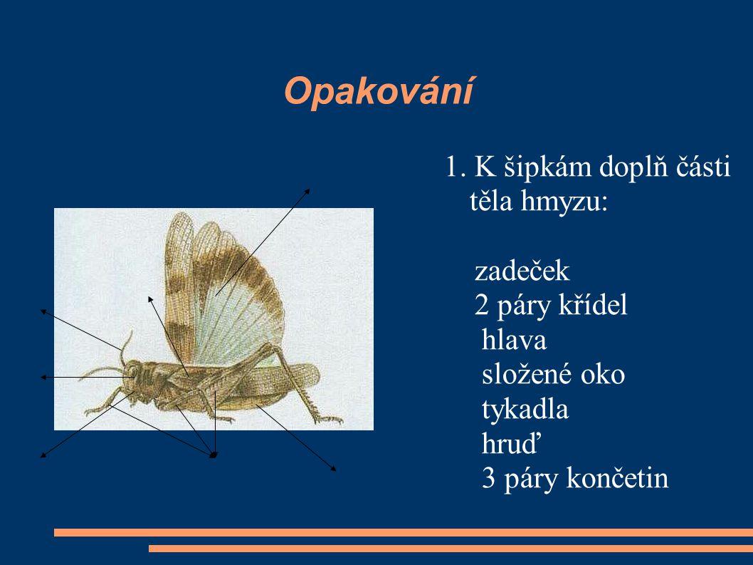 Opakování 1. K šipkám doplň části těla hmyzu: zadeček 2 páry křídel hlava složené oko tykadla hruď 3 páry končetin