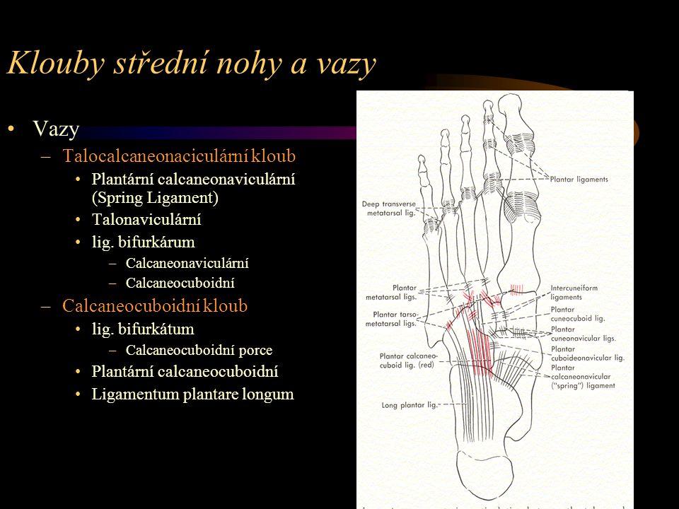 Klouby střední nohy a vazy Vazy –Talocalcaneonaciculární kloub Plantární calcaneonaviculární (Spring Ligament) Talonaviculární lig. bifurkárum –Calcan