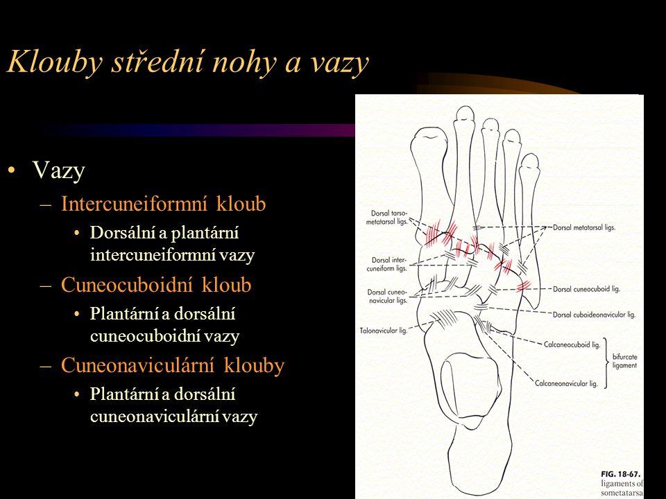Klouby střední nohy a vazy Vazy –Intercuneiformní kloub Dorsální a plantární intercuneiformní vazy –Cuneocuboidní kloub Plantární a dorsální cuneocubo