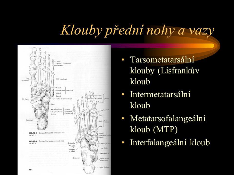 Klouby přední nohy a vazy Tarsometatarsální klouby (Lisfrankův kloub Intermetatarsální kloub Metatarsofalangeální kloub (MTP) Interfalangeální kloub