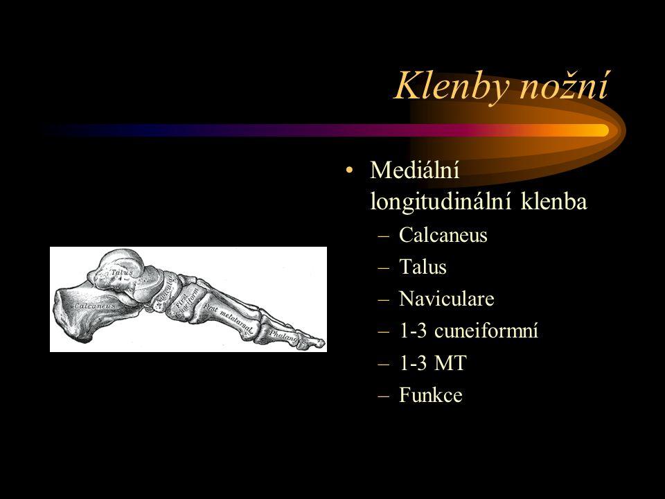 Klenby nožní Mediální longitudinální klenba –Calcaneus –Talus –Naviculare –1-3 cuneiformní –1-3 MT –Funkce