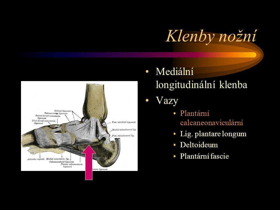 Klenby nožní Mediální longitudinální klenba Vazy Plantární calcaneonaviculární Lig. plantare longum Deltoideum Plantární fascie