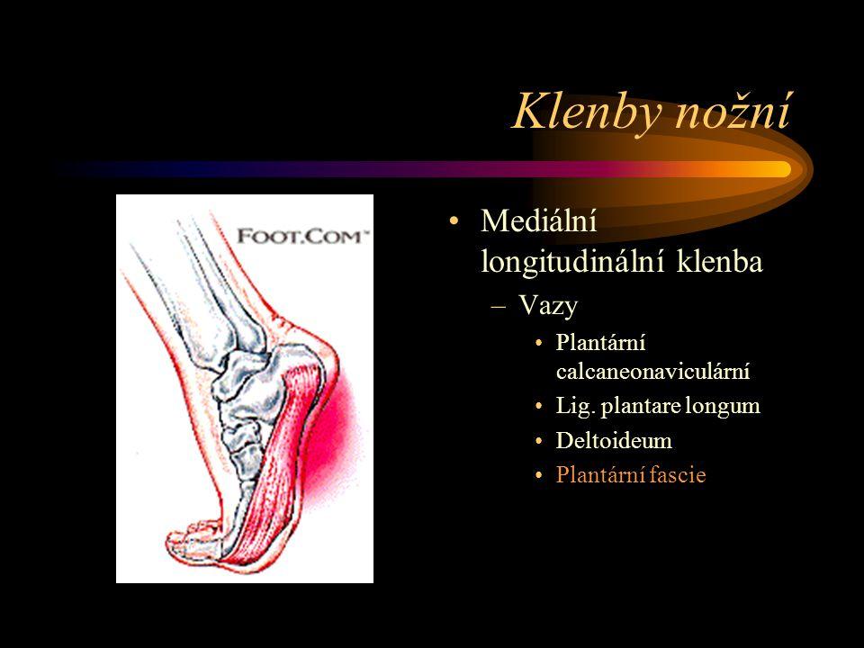 Klenby nožní Mediální longitudinální klenba –Vazy Plantární calcaneonaviculární Lig. plantare longum Deltoideum Plantární fascie