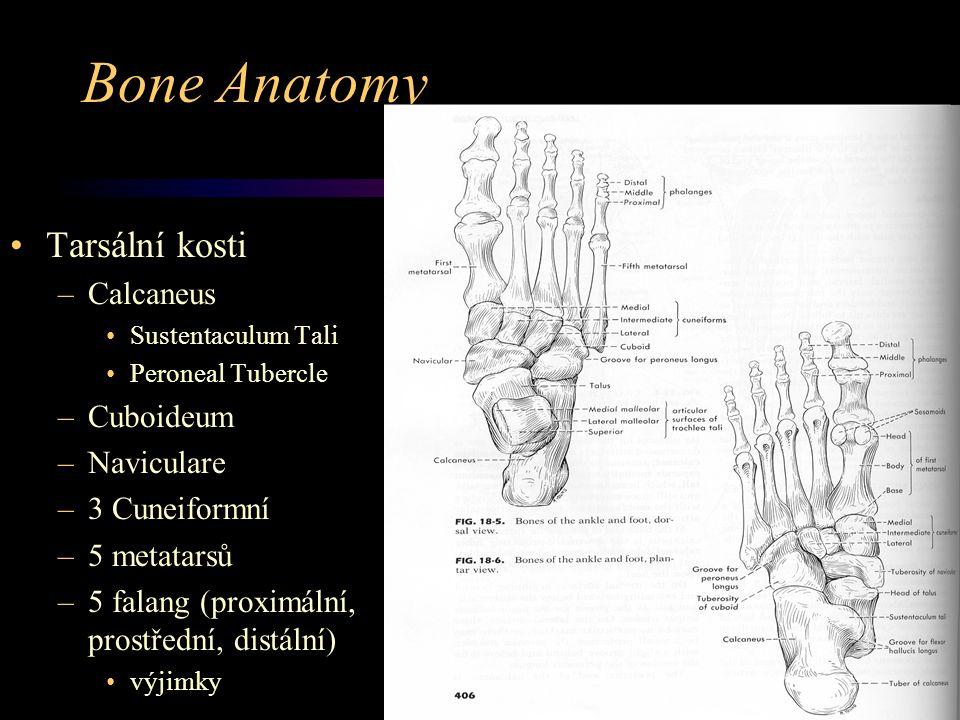 Bone Anatomy Tarsální kosti –Calcaneus Sustentaculum Tali Peroneal Tubercle –Cuboideum –Naviculare –3 Cuneiformní –5 metatarsů –5 falang (proximální,