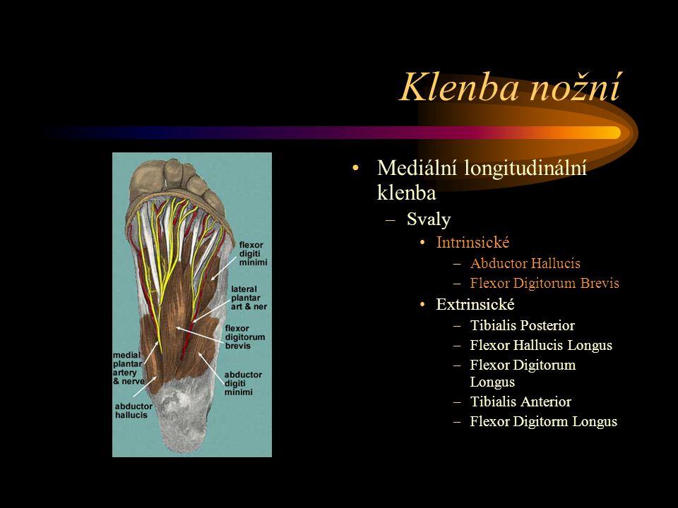 Klenba nožní Mediální longitudinální klenba –Svaly Intrinsické –Abductor Hallucis –Flexor Digitorum Brevis Extrinsické –Tibialis Posterior –Flexor Hal