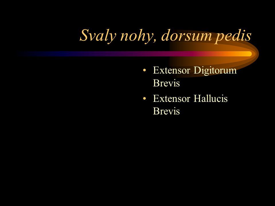 Svaly nohy, dorsum pedis Extensor Digitorum Brevis Extensor Hallucis Brevis