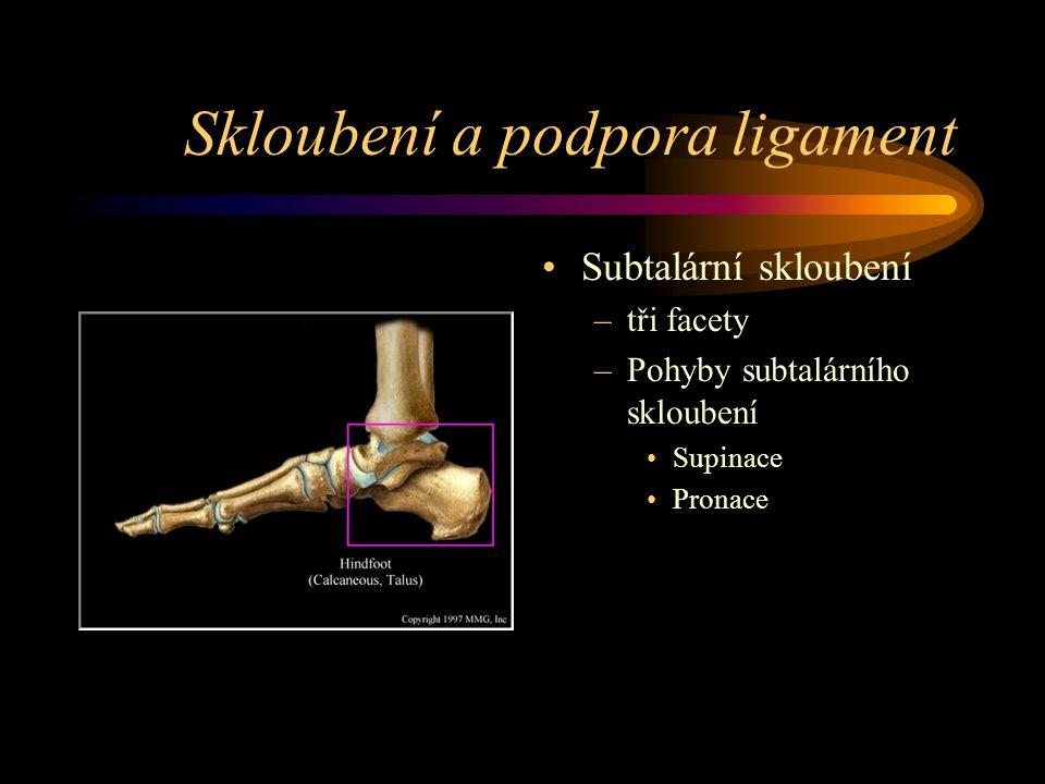 Skloubení a podpora ligament Subtalární skloubení –tři facety –Pohyby subtalárního skloubení Supinace Pronace
