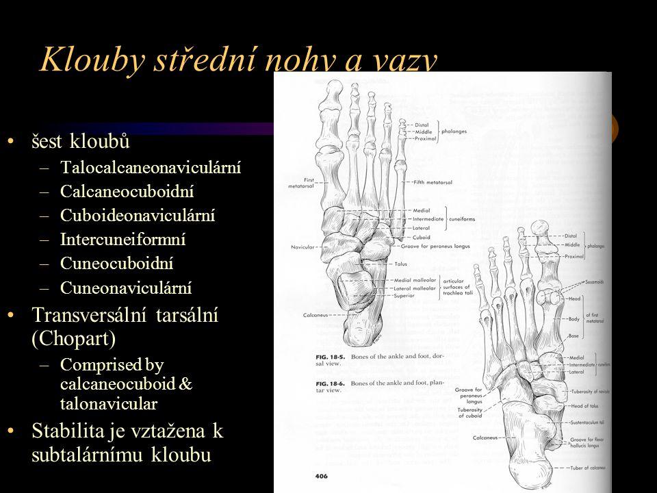 Klouby střední nohy a vazy šest kloubů –Talocalcaneonaviculární –Calcaneocuboidní –Cuboideonaviculární –Intercuneiformní –Cuneocuboidní –Cuneonaviculá