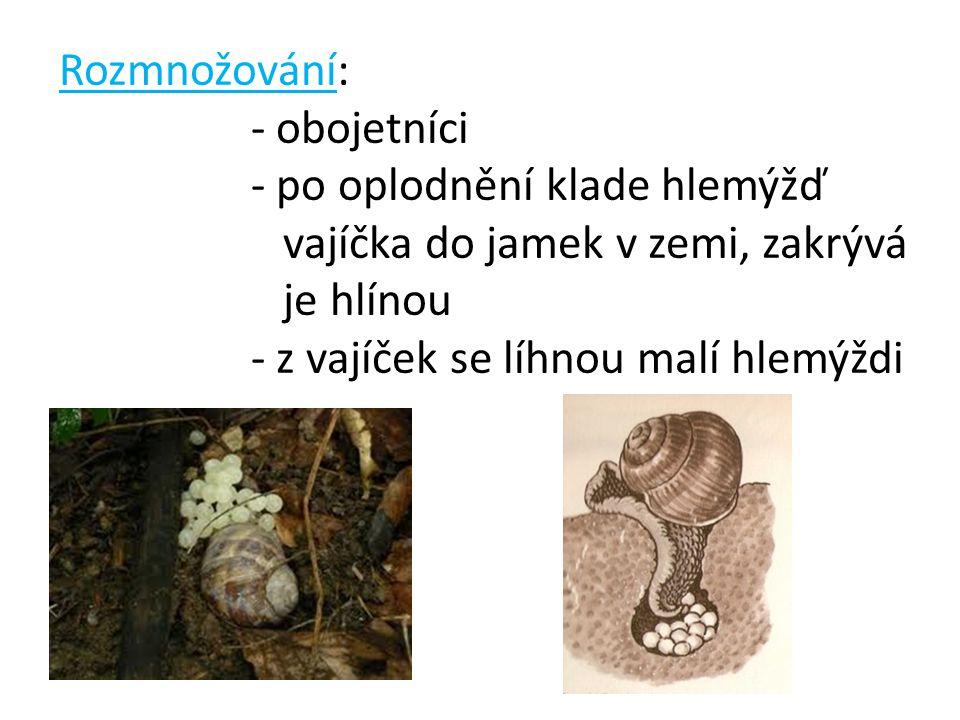 Rozmnožování: - obojetníci - po oplodnění klade hlemýžď vajíčka do jamek v zemi, zakrývá je hlínou - z vajíček se líhnou malí hlemýždi