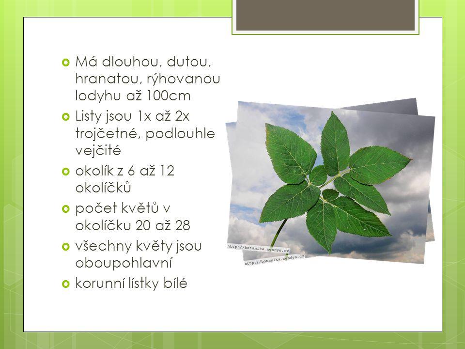  Má dlouhou, dutou, hranatou, rýhovanou lodyhu až 100cm  Listy jsou 1x až 2x trojčetné, podlouhle vejčité  okolík z 6 až 12 okolíčků  počet květů