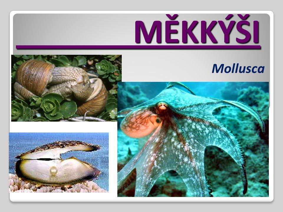 MĚKKÝŠI MĚKKÝŠI Mollusca
