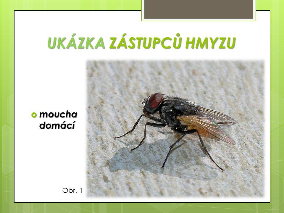 TYPY ÚSTNÍHO ÚSTROJÍ a/ kousací (brouci) b/ bodavě sací (komáři) c/ lízavě sací (mouchy) d/ sací (motýli Obr.