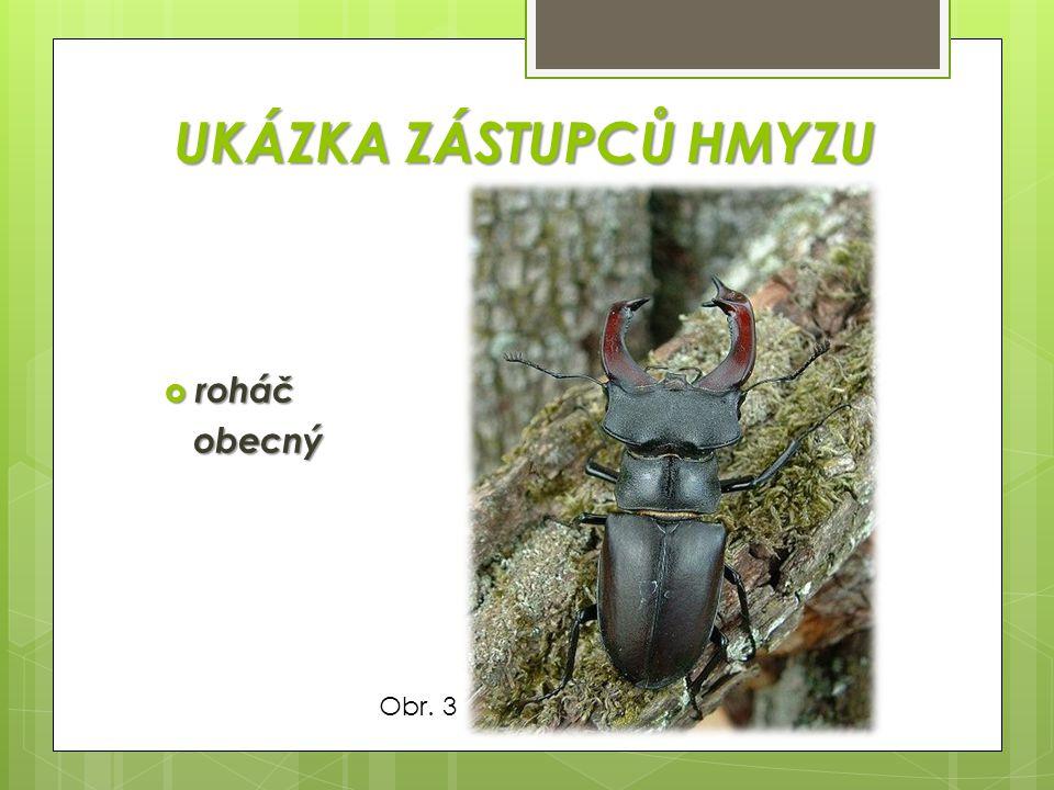 KŘÍDLA 2 páry hustou žilnatinou  většina zástupců hmyzu má 2 páry blanitých křídel, vyztužených hustou žilnatinou, která jim dodává pevnost při letu krovky a blanitá křídla Obr.