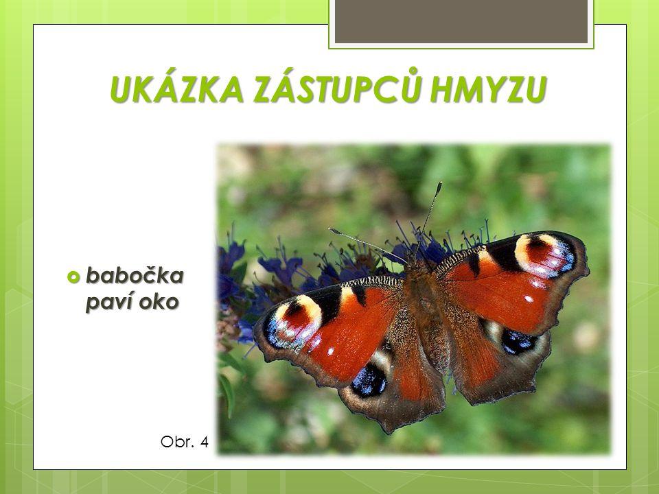KŘÍDLA  žilnatina na křídle hmyzu Obr. 13