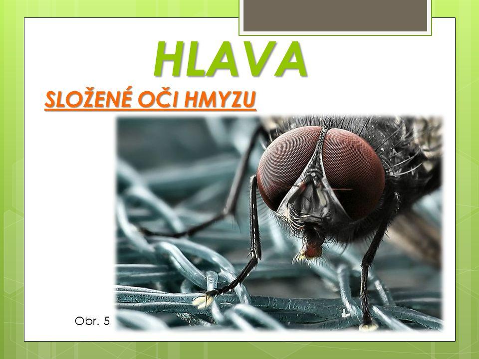 ZADEČEK srdce  v zadečku hmyzu je umístěno srdce trávicívylučovací  vyúsťuje zde trávicí ústrojí, vylučovací pohlavnívzdušnice i pohlavní orgány a vzdušnice dýchací soustavu  vzdušnice tvoří dýchací soustavu z postupně se větvících trubiček kyslík  přivádějí kyslík do všech částí těla kladélkožihadlo  na konci zadečku se může vyskytovat kladélko nebo žihadlo