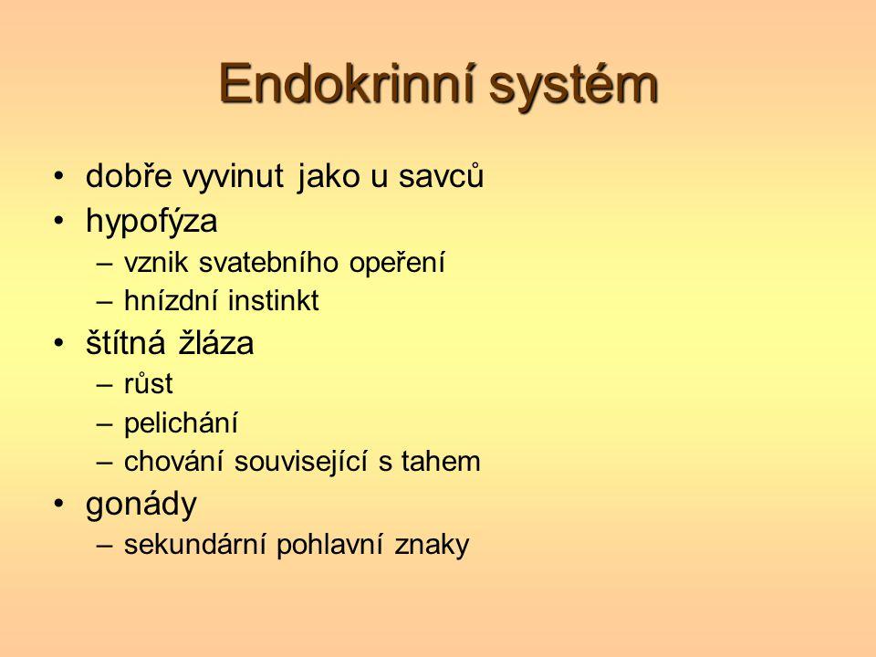 Endokrinní systém dobře vyvinut jako u savců hypofýza –vznik svatebního opeření –hnízdní instinkt štítná žláza –růst –pelichání –chování související s