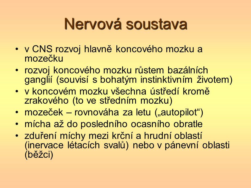 Nervová soustava v CNS rozvoj hlavně koncového mozku a mozečku rozvoj koncového mozku růstem bazálních ganglií (souvisí s bohatým instinktivním živote
