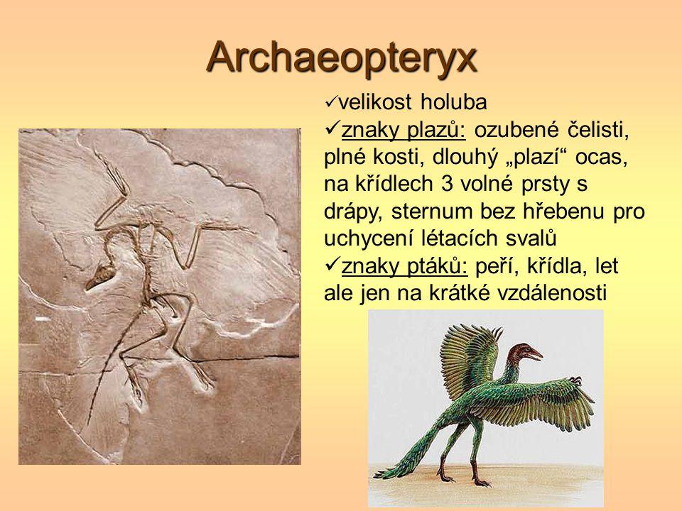 """Archaeopteryx velikost holuba znaky plazů: ozubené čelisti, plné kosti, dlouhý """"plazí"""" ocas, na křídlech 3 volné prsty s drápy, sternum bez hřebenu pr"""
