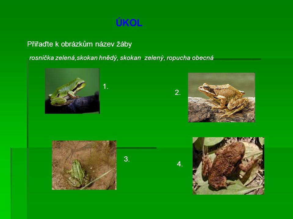 ÚKOL Přiřaďte k obrázkům název žáby rosnička zelená,skokan hnědý, skokan zelený, ropucha obecná 1. 3. 4. 2.